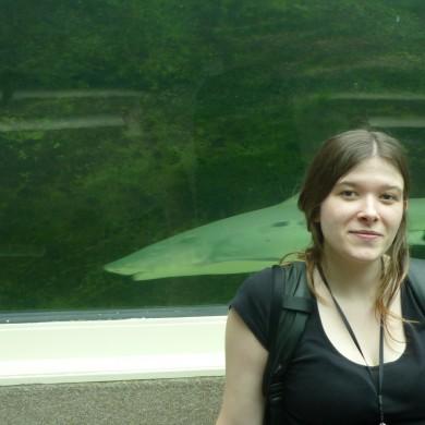 requins aquarium sydney