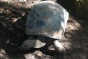 tortue taronga zoo