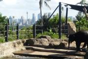 bébé éléphant zoo de taronga