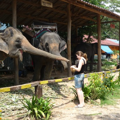 éléphants koh chang