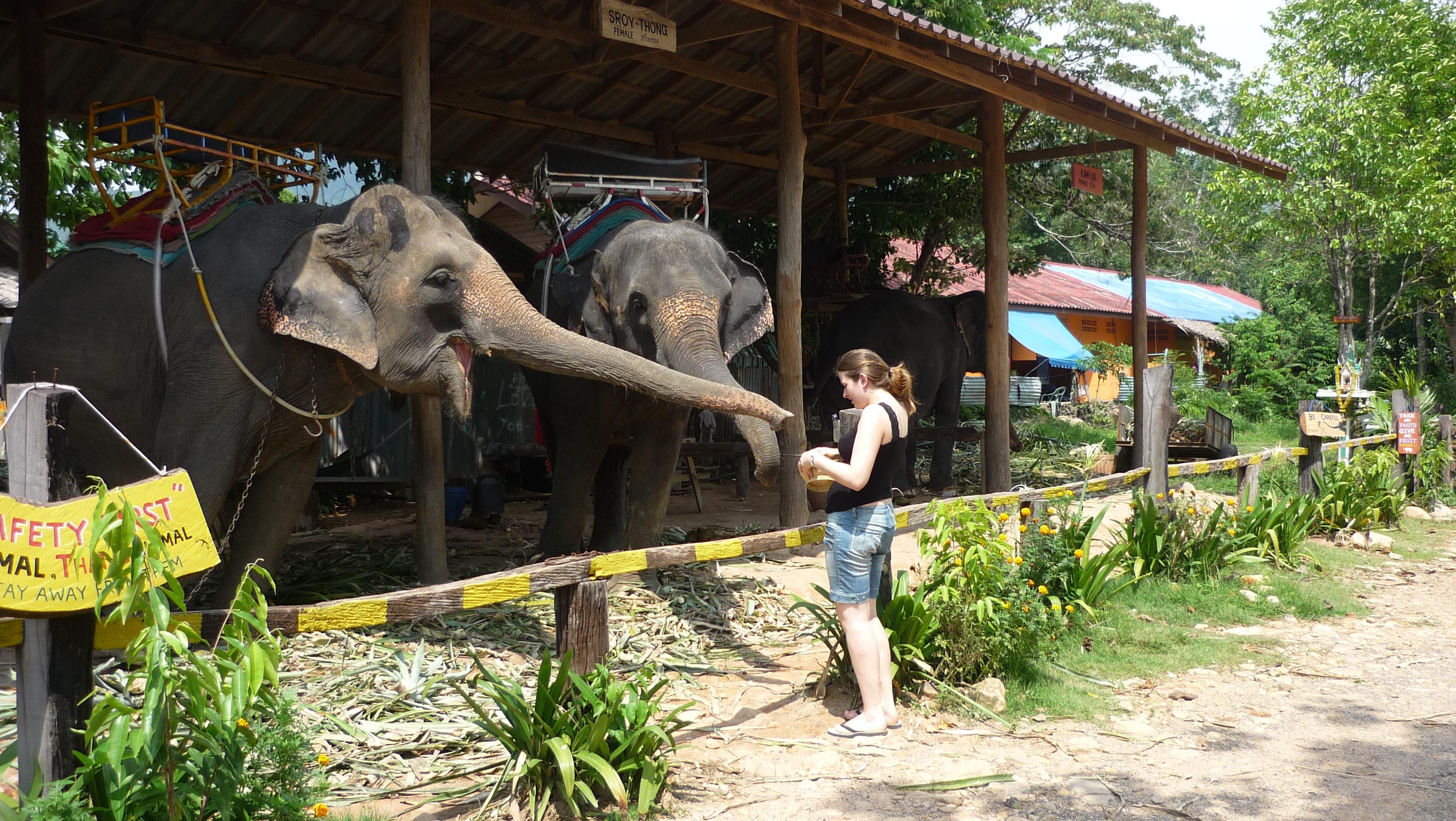 éléphants koh chang