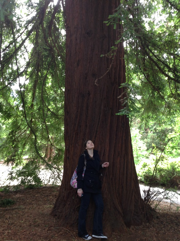 me red woods kew gardens londres