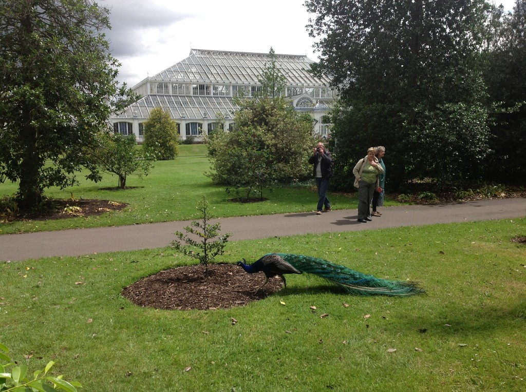 paon kew gardens londres