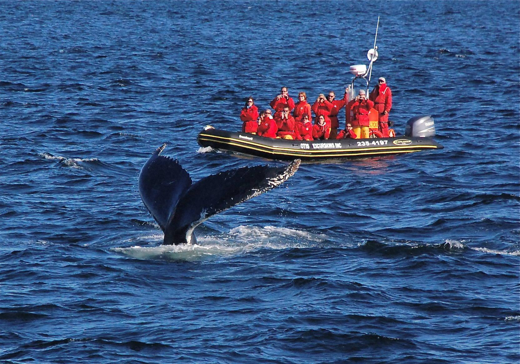 Observer les baleines au Québec