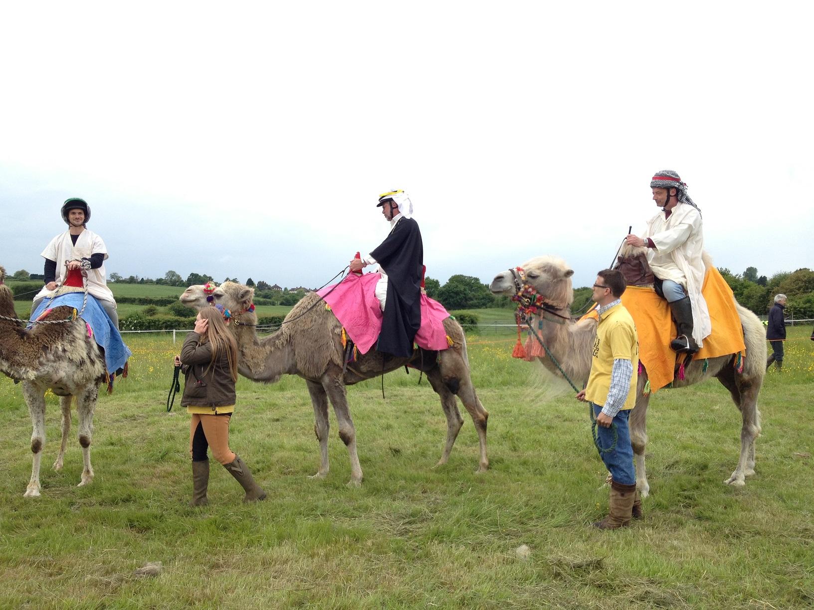 northaw course de chameaux