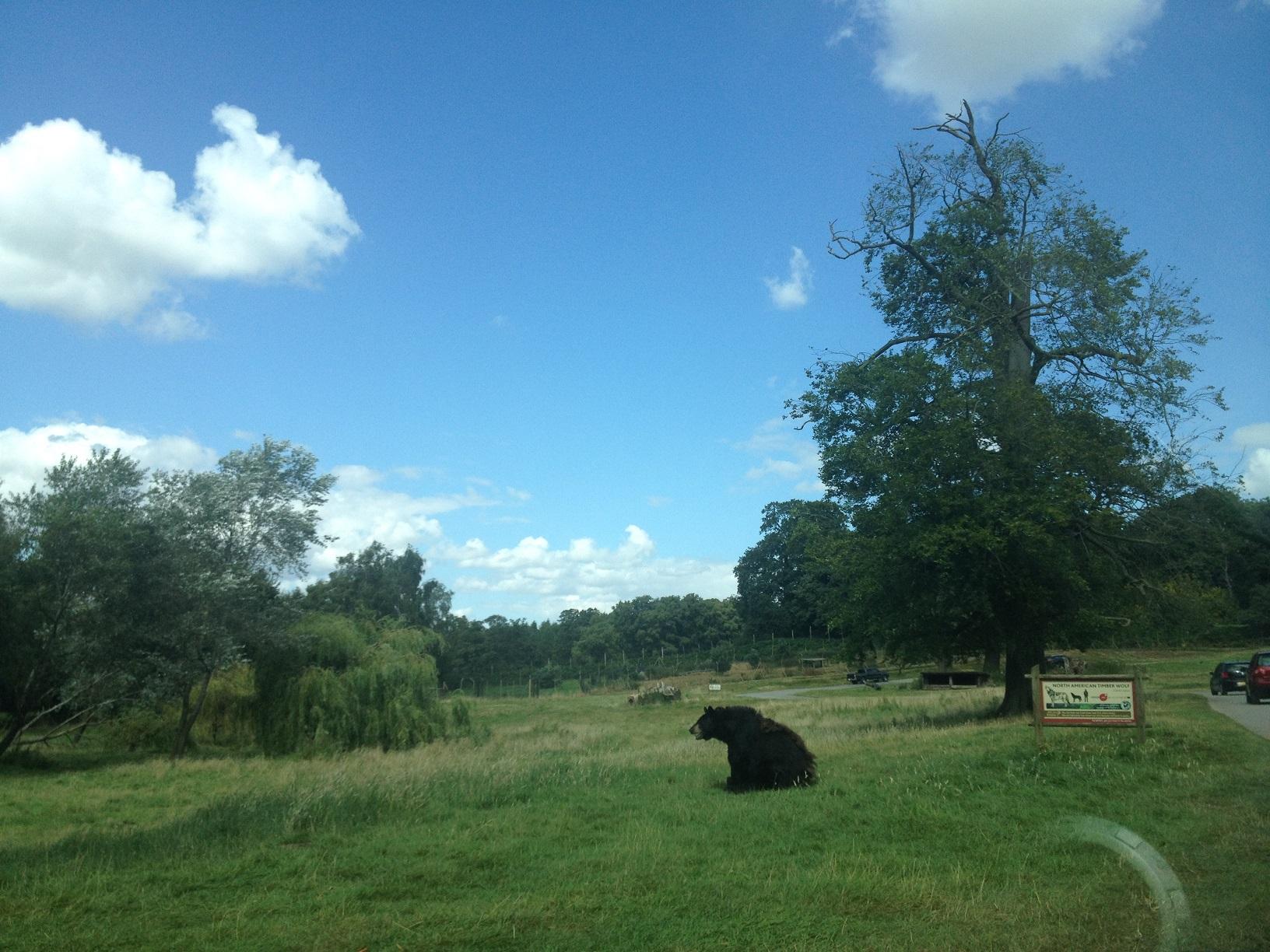 ours safari au royaume uni