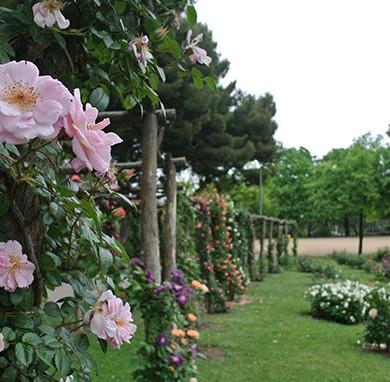 roses-parc-cervantes