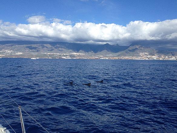 baleines-tenerife