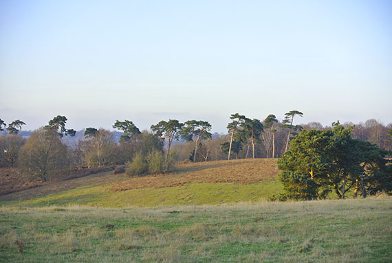 foret-sutton-hoo