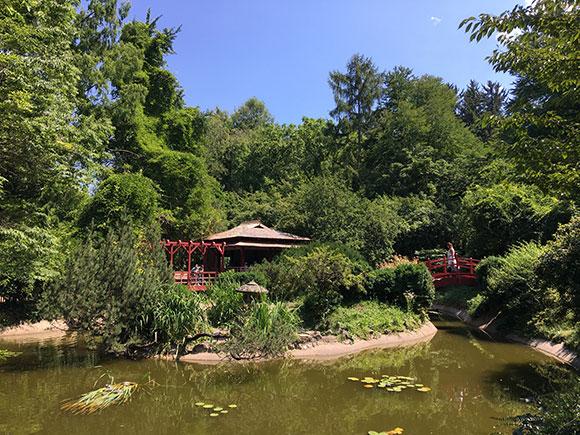 jardin-japonais-cluj-napoca
