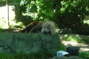 ours zoo de taronga