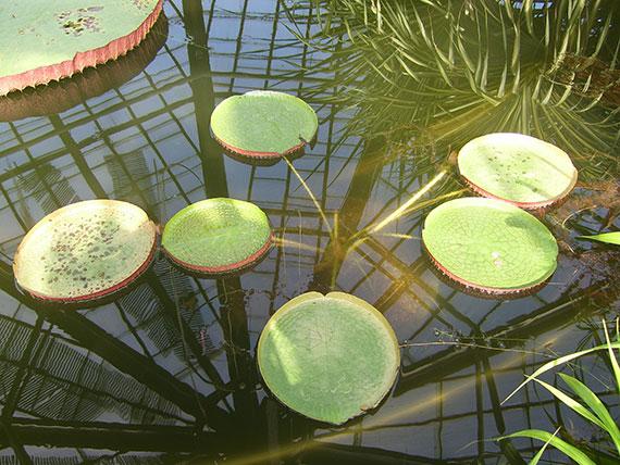 plantes-jardin-botanique