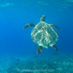 Nager avec les tortues gili