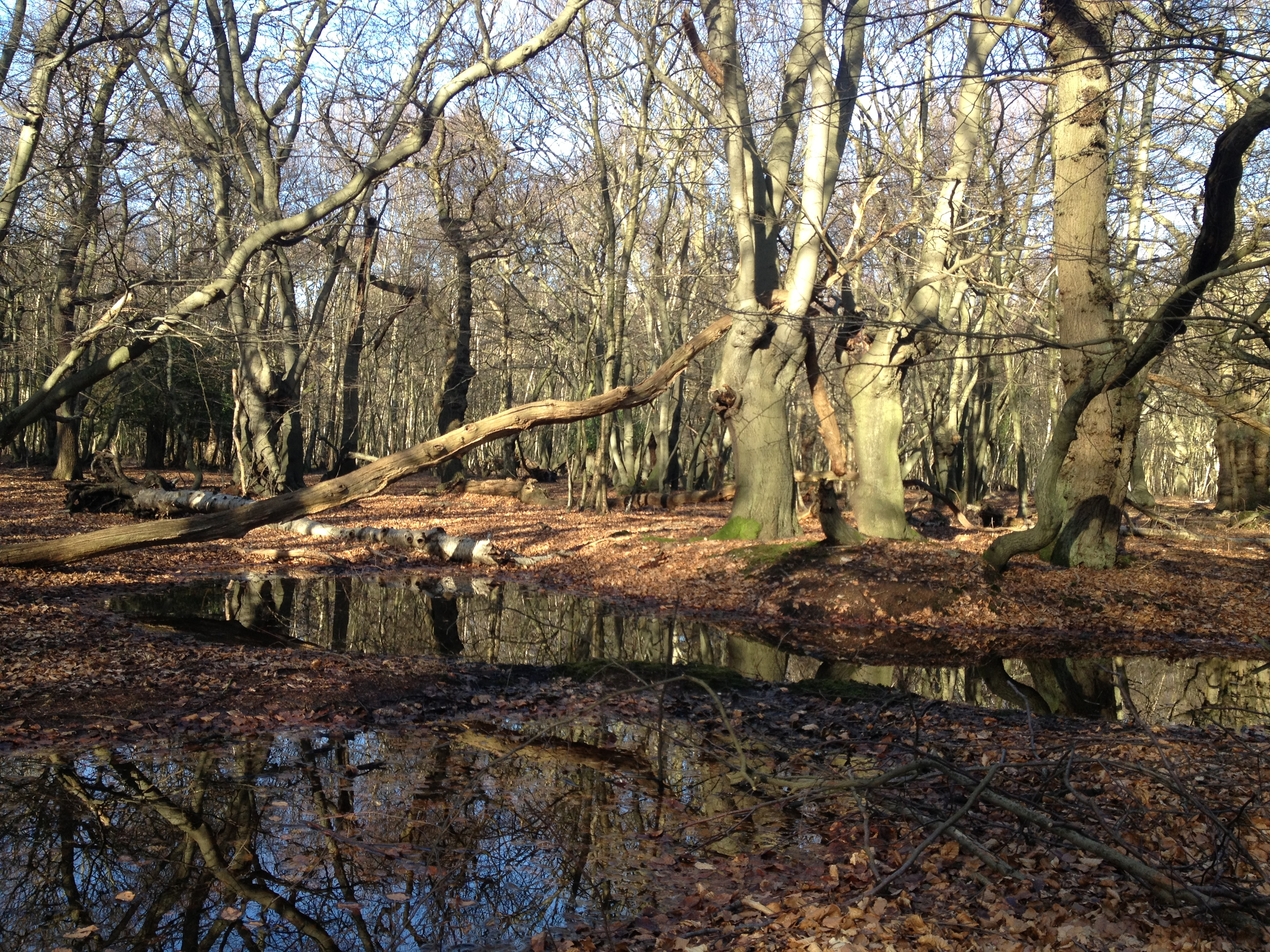 visiter angleterre forêt de epping