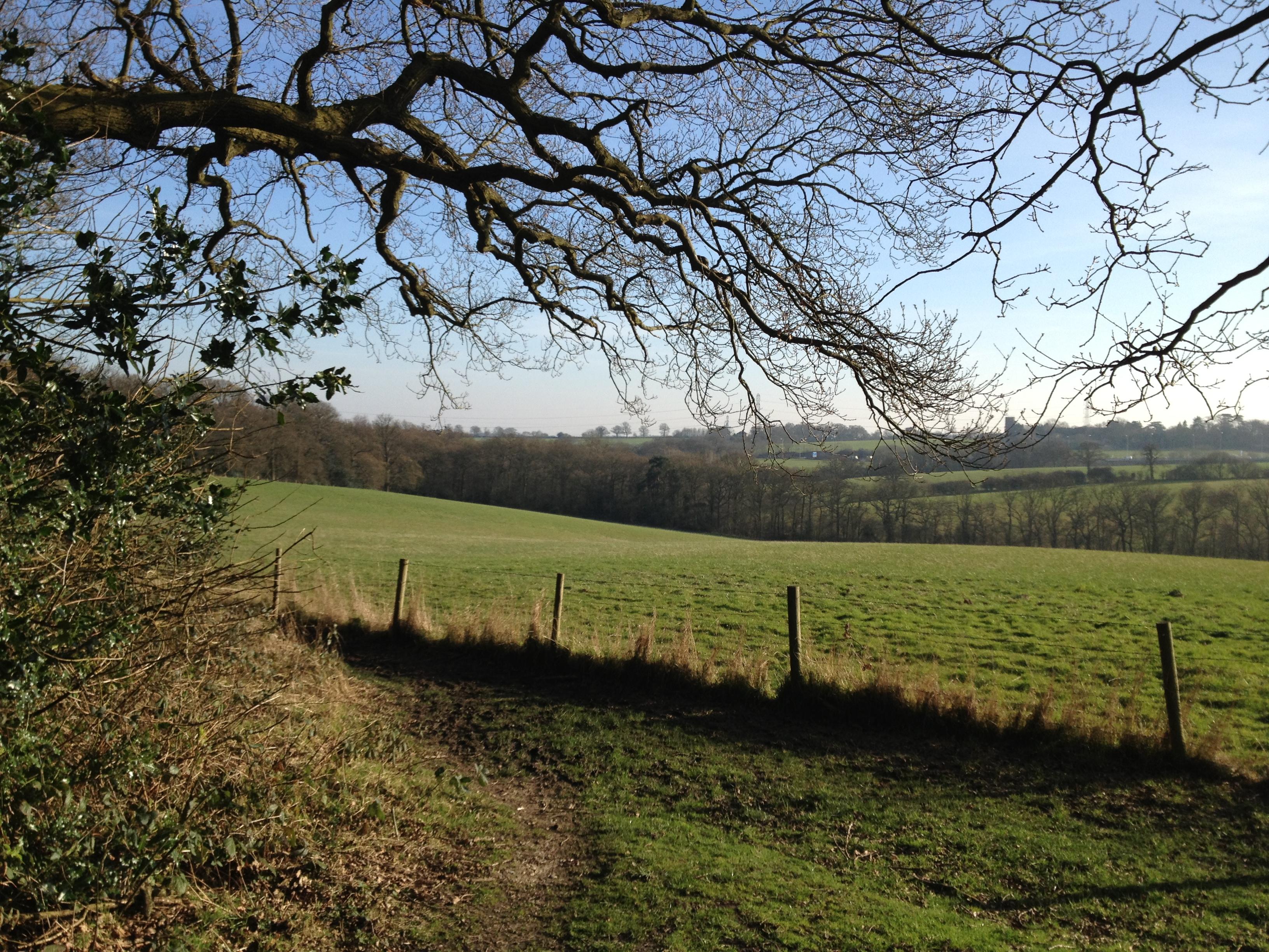 visiter angleterre - forêt hertfordshire