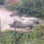 visiter le zoo de lille
