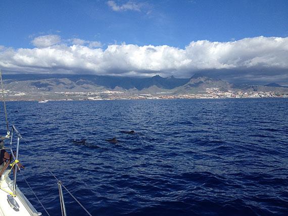 tenerife-boat-trip