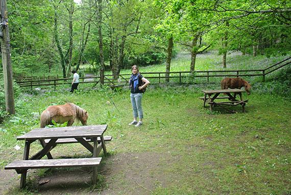 avec-les-poneys
