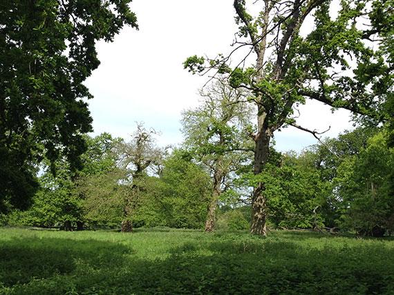 foret-Holkham