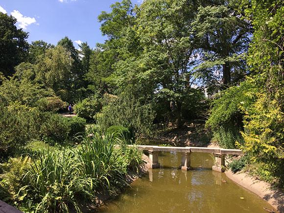 cluj-jardin-japonais