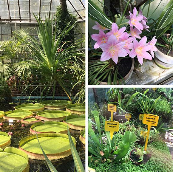 jardin-botanique-(1)
