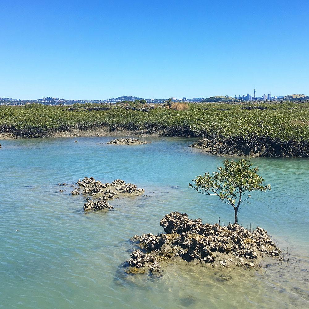 rangitoto-island-auckland