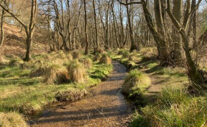 cannock-chase-riviere